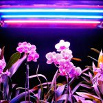 Как выбрать лампы для растений? Фитолампа своими руками. миниатюра
