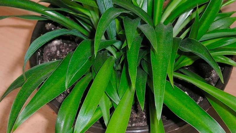 родина растения