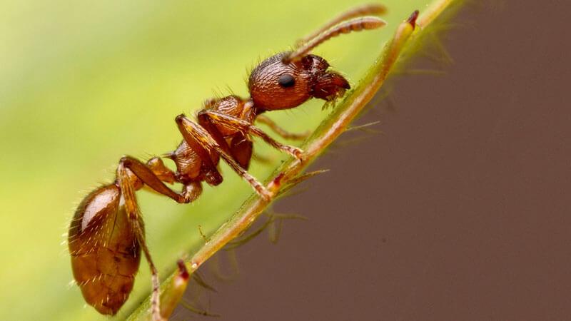 как избавиться от муравьев в доме и на огороде