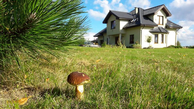выращивание белых грибов в теплице круглый год