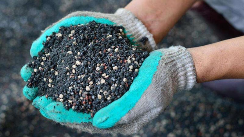 размножение жасмина черенками осенью